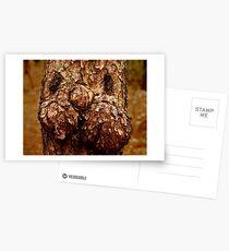 Pine Bunny Postcards