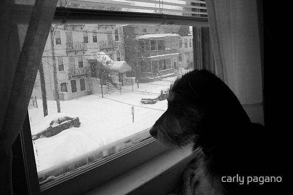 Winter wonderland by carly pagano