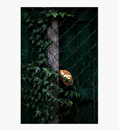Autumn Messenger Photographic Print