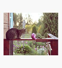 Cat and peonies Photographic Print