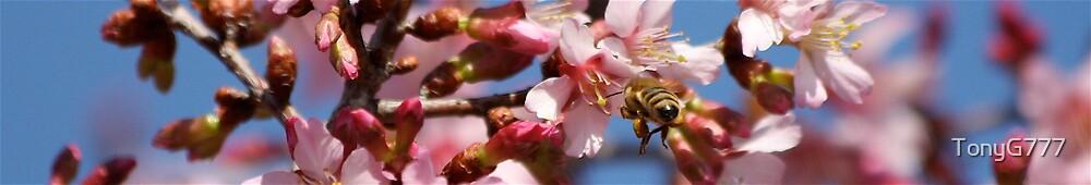 Bee Nice by TonyG777