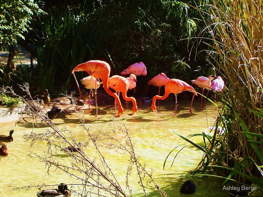 Flamingo's by Ashley Berge