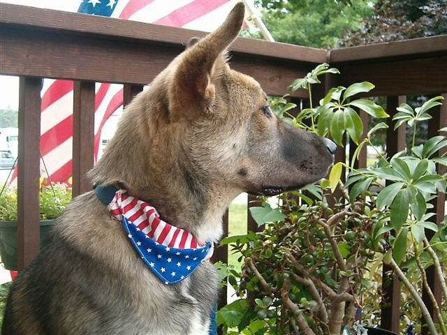 Proud to be an American by Myrla