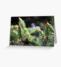 Fresh pine needles Greeting Card