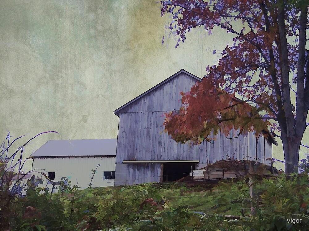 The Barn under the maple tree by vigor