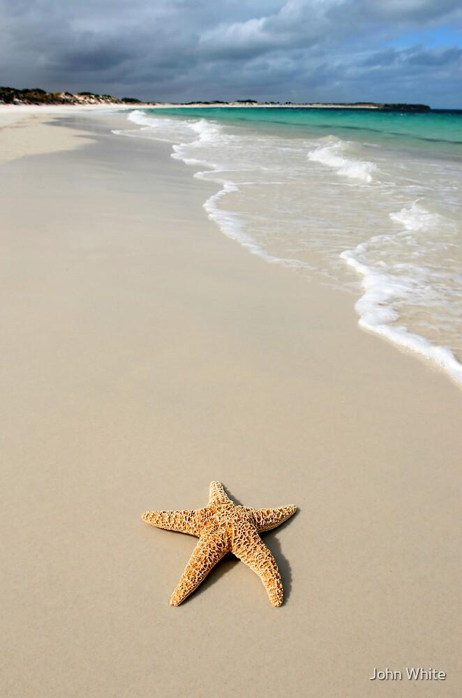 Starfish by John White