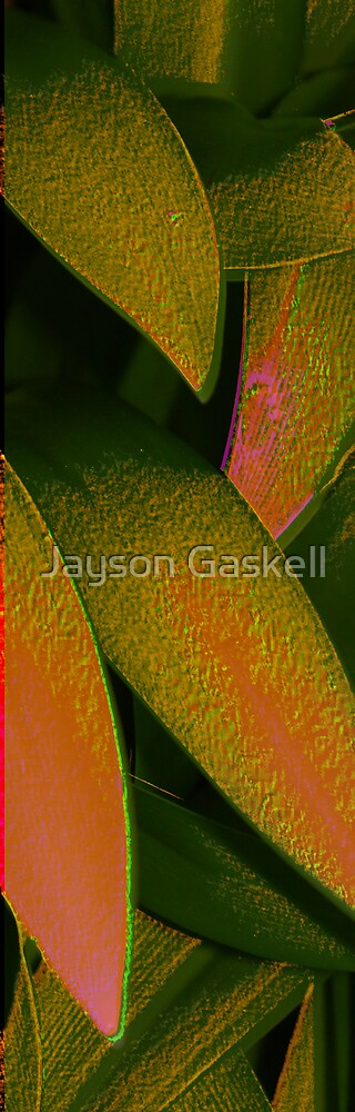 Leaf art by Jayson Gaskell