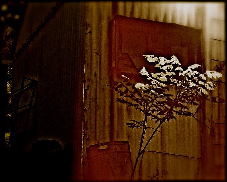 Untitled by Mmackinnon