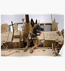 A military working dog sits on a U.S. Army M2A3 Bradley Fighting Vehicle. Poster