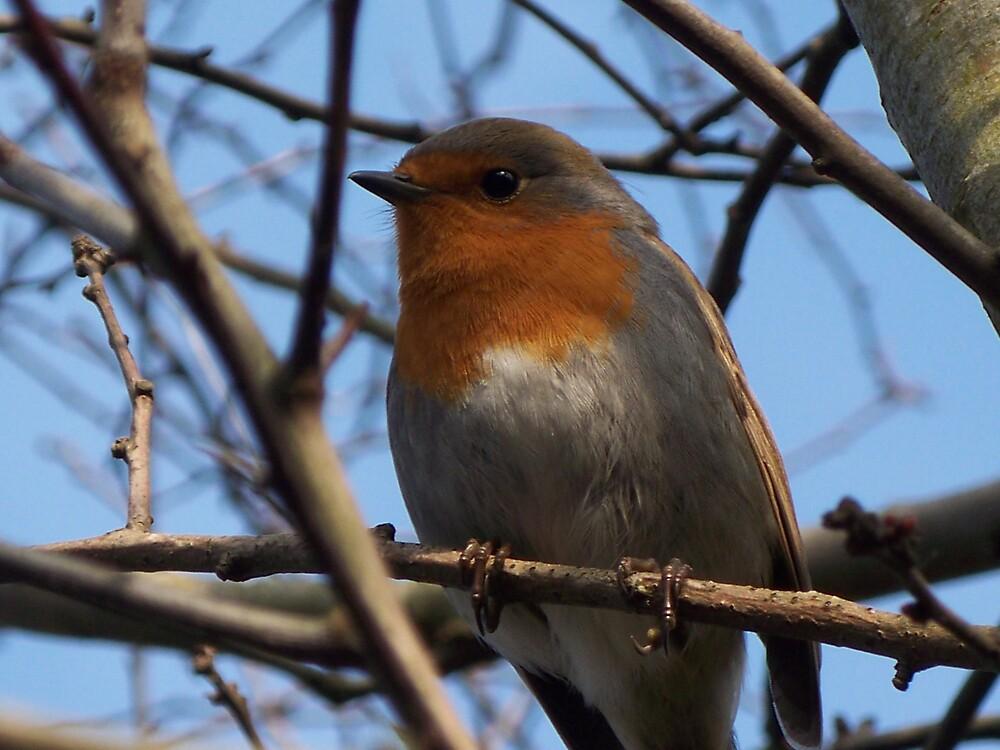 Robin at Home by Raya07