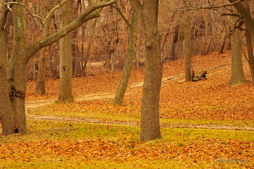 in the park  by efimpodovich