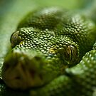 Green With Envy by Aaron  Sheehan