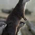 asian short clawed otter by nakomis