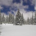 Fresh Snow by Tamas Bakos