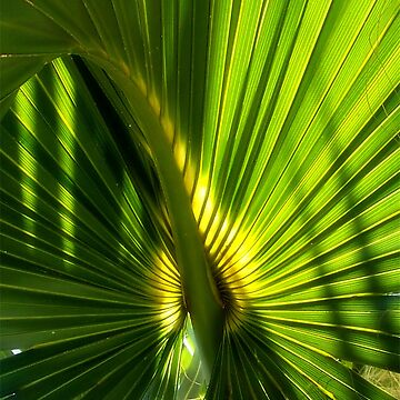 palm curl by smconnard