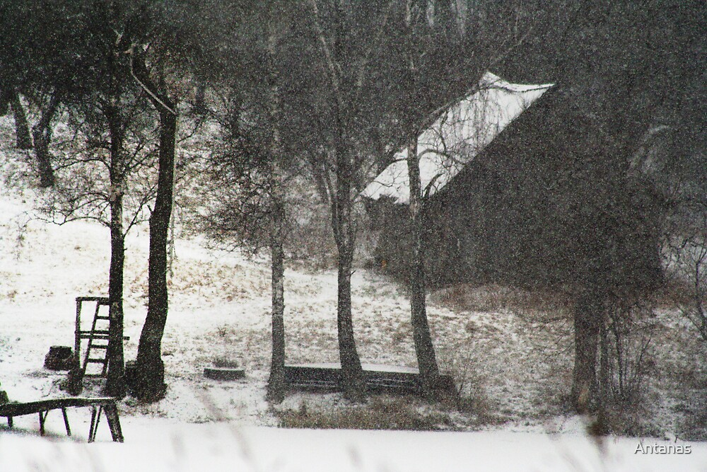 Snow by Antanas