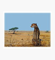 Patience, Cheetah Artwork Photographic Print