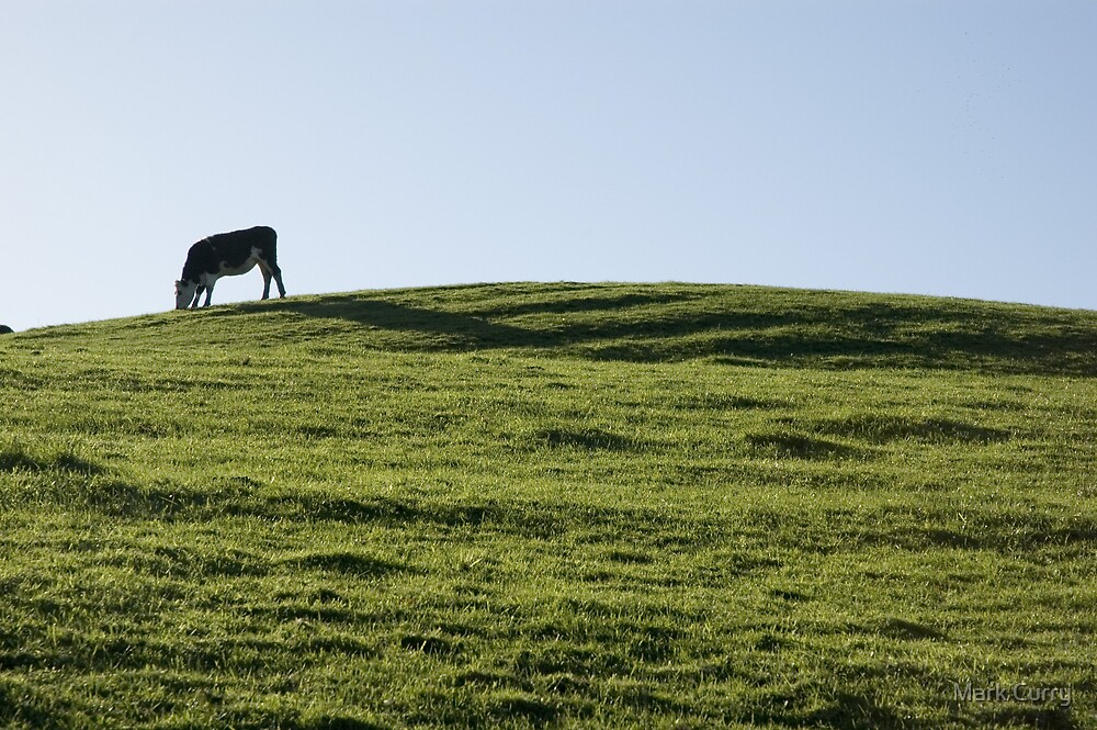 Cow on the horizon by Mark Curry