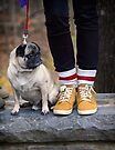 Cutest Pug by Yannik Hay
