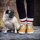 Cutest Pug by Yannik Hay