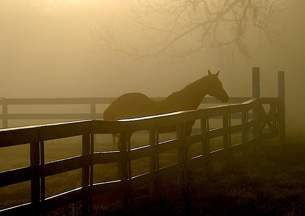 Misty Morning by Scott Hansen