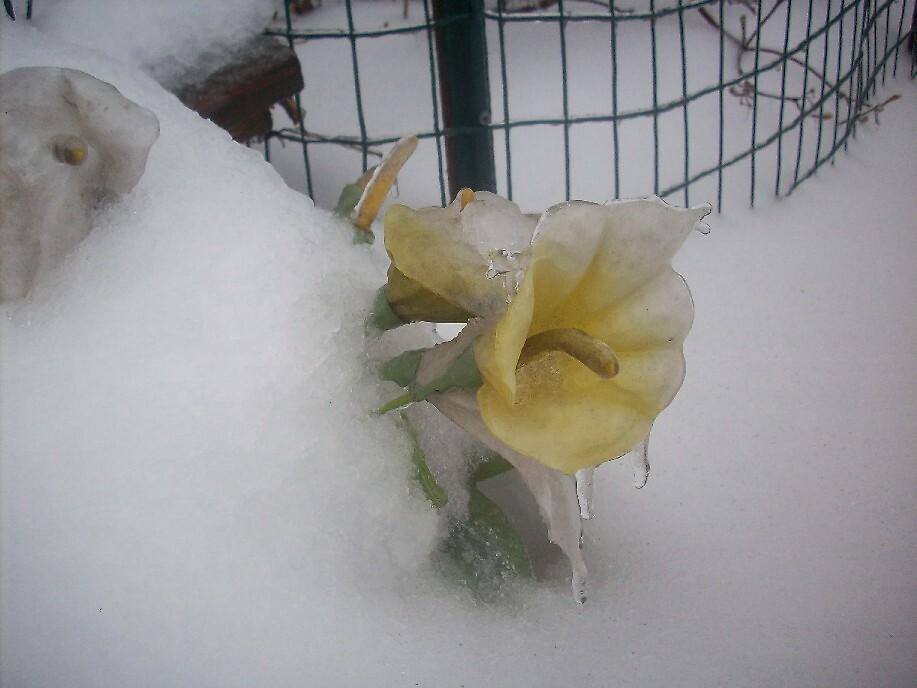 Frozen Beauty by ripinamberlost