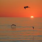 Sunset Flight by Bob Hardy
