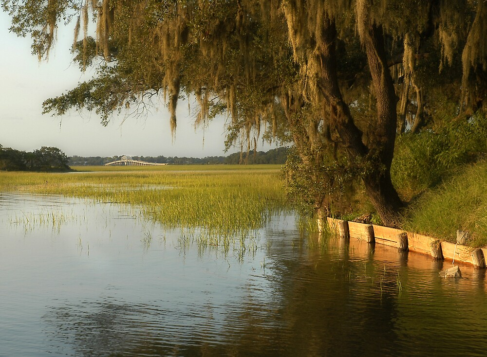 Marsh View by Scott Hansen