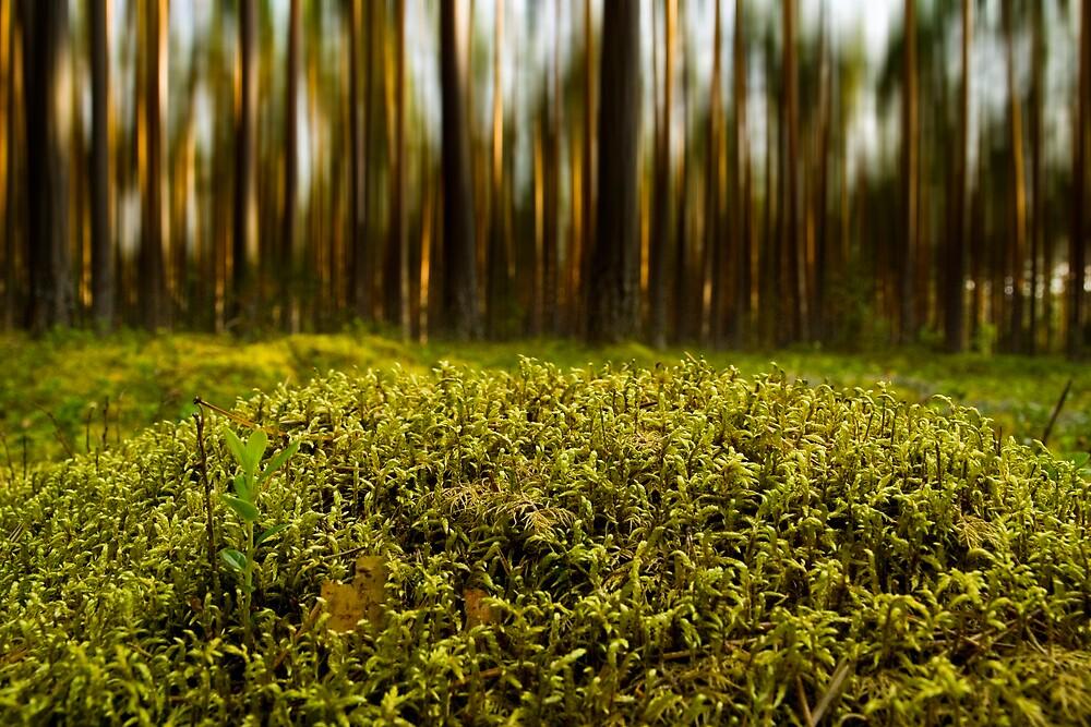 Forest by Csaba Jekkel