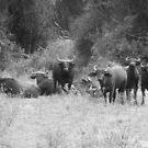 Buffalo Gathering by skaranec1981