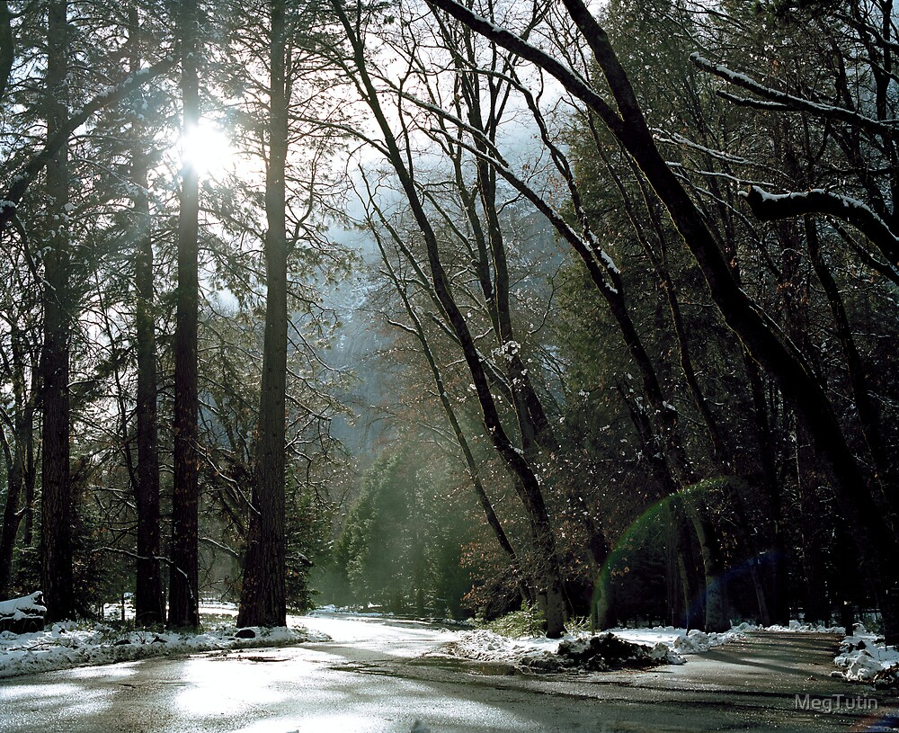 Inside Yosemite National Park by MegTutin