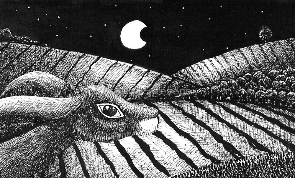 Hare In Moonlight by Kerina Strevens