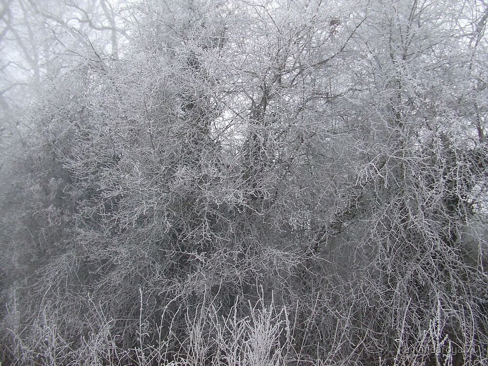trees by amandaroyal71