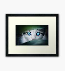Cat - Amazing Cat Framed Print