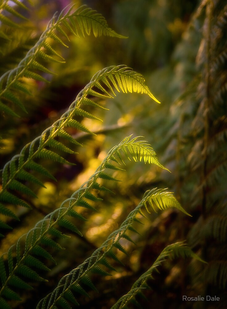 Fitzroy fronds . . . by Rosalie Dale