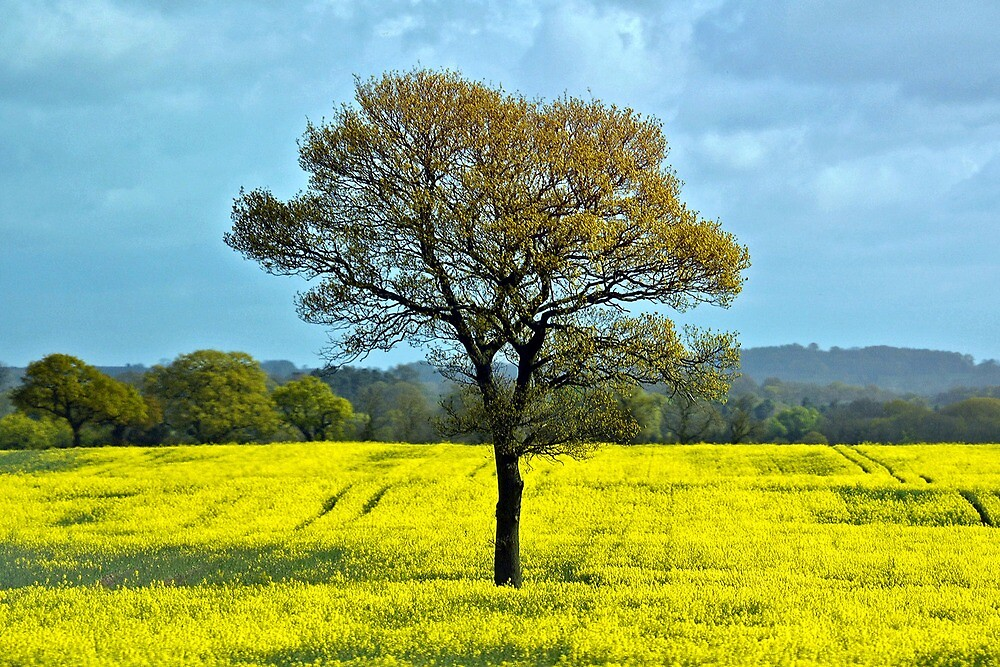 Single tree on a yellow carpet by Arie Koene