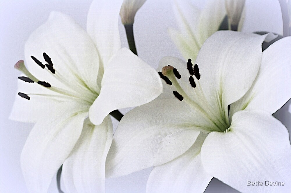 Lilies 2 by Bette Devine