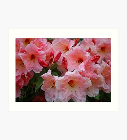 Awesome Azalea Art Print