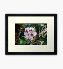 White Orchid Flowers Framed Print