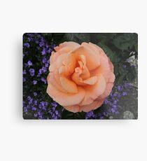 Peach & Lilac Metal Print