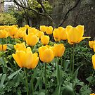 Happiness Is Yellow Tulips by CreativeEm