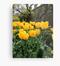 Happiness Is Yellow Tulips Metal Print