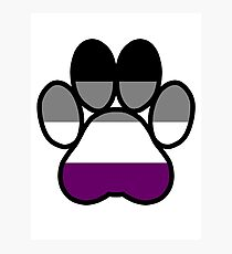 Pride Paws - Asexual 1 Photographic Print