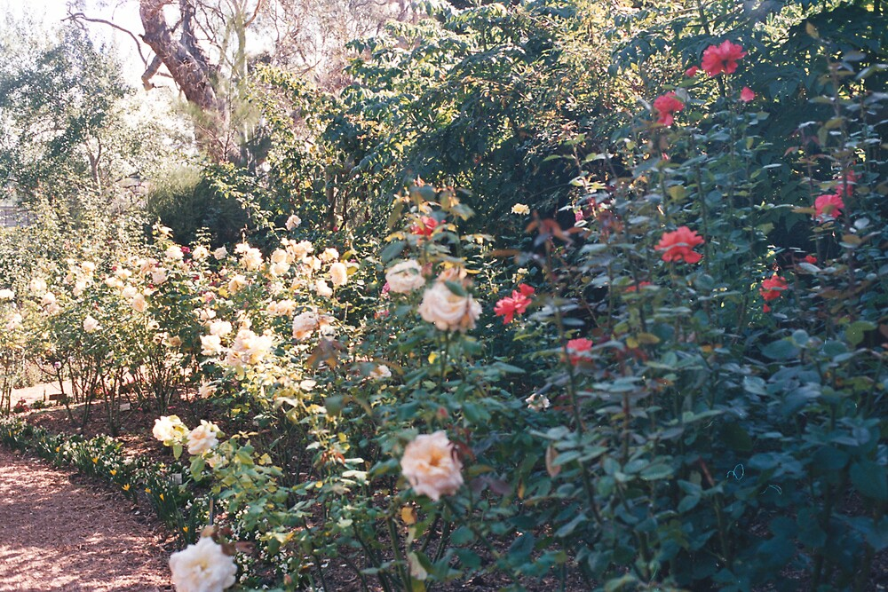 Botanical Gardens Melbourne 1980s by Roy Hirsch