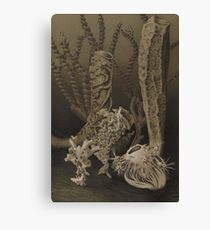 Natural History Glass Sponges Canvas Print