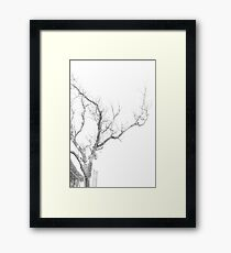 Winter Of My Youth Framed Print
