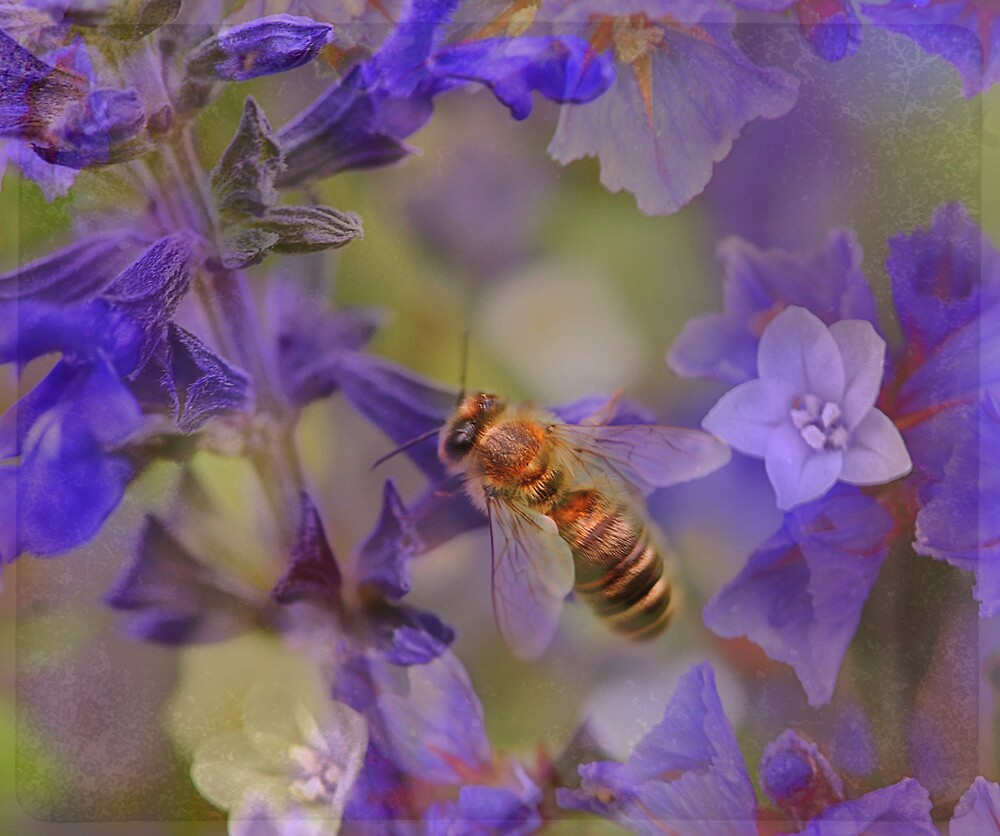 fairies and bees by SharonLea