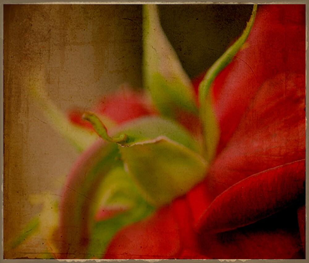 vintage rose by SharonLea