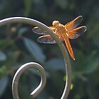 Dragon Fly - Interesting Info. in my details & why we shouldn't use pesticides by leih2008