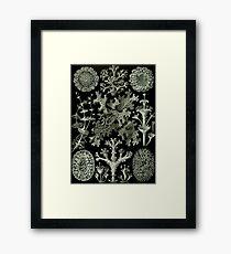 Natural History Lichen Framed Print